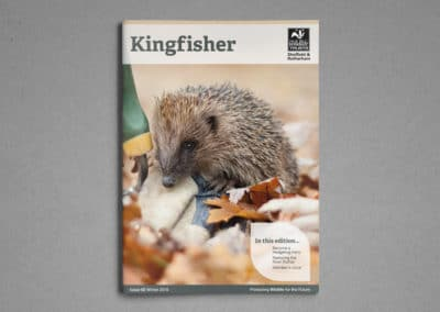 Kingfisher magazine